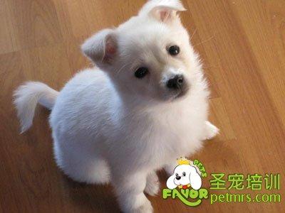 刚出生的宠物狗要远离寄生虫
