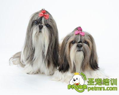 狗狗毛发护理_宠物饲养