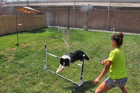 宠物敏捷训练