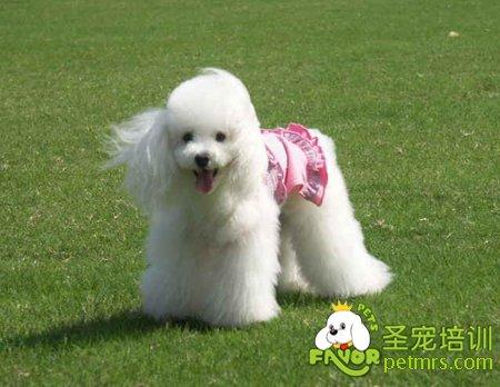 最可爱的宠物狗