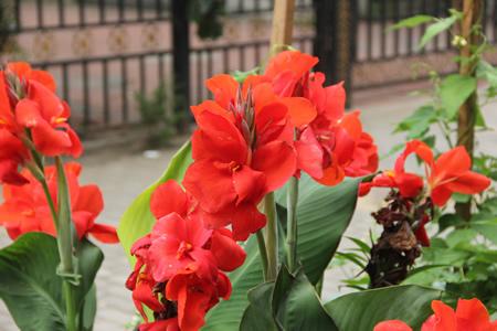 学员休息区-鲜花