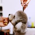 宠物训导班
