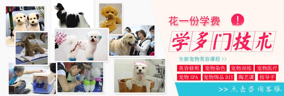 犬种美容方法