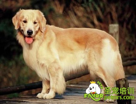 所以每个主人饲养狗狗几乎都要经历宠物犬所有生老病