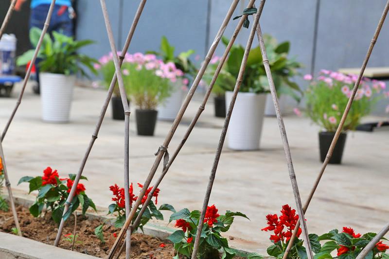 张家湾校区里的花朵