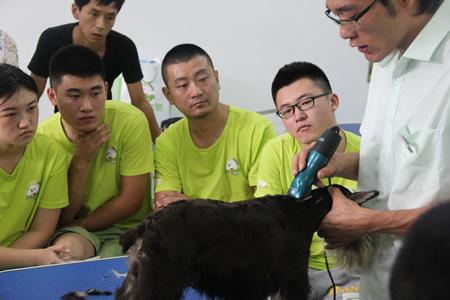 圣宠宠物美容学校第24期:雪纳瑞美容修剪示范讲解