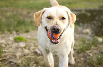 玩具对狗狗有哪些好处?怎样挑选?