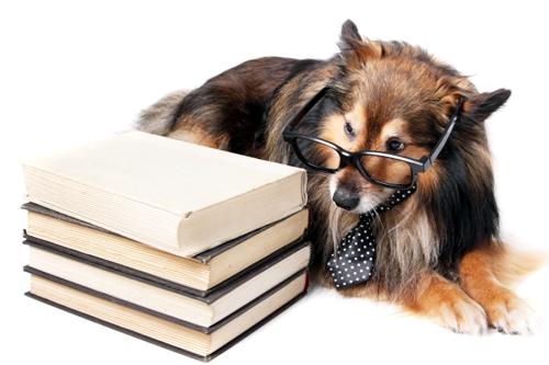 怎样训练狗狗的学习能力