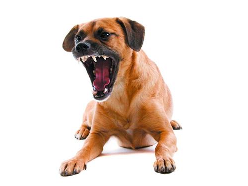 狗狗护食咬人怎么办