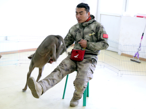 训练狗狗的方法和技巧分享