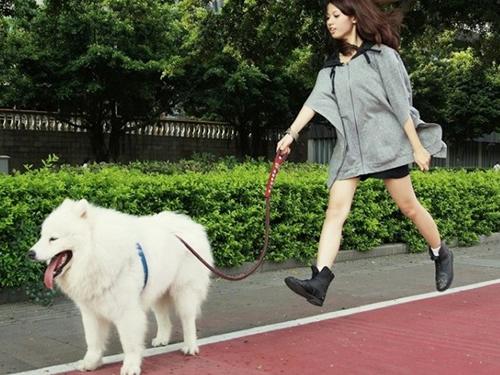 狗狗体外寄生虫预防感染方法