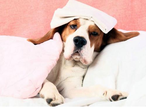 如何照顾生病中的狗狗