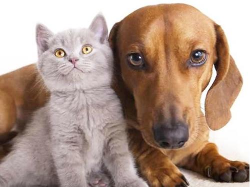 猫狗结扎手术饲主考虑两极化