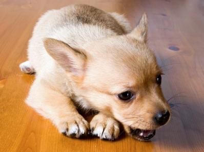 宠物是否也有强迫症