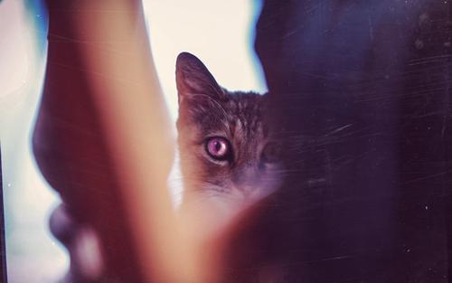 宠物眼睛为什么会变红