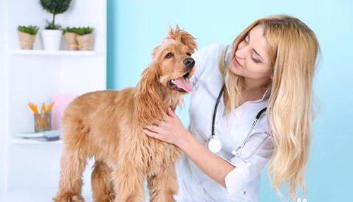 宠物便秘算病吗