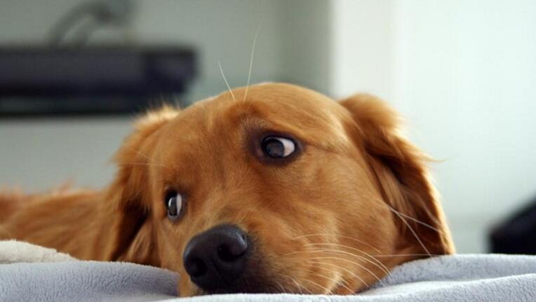 狗狗的心里健康你关注了吗