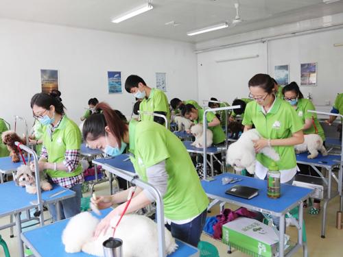 圣宠宠物美容师培训学校实操练习