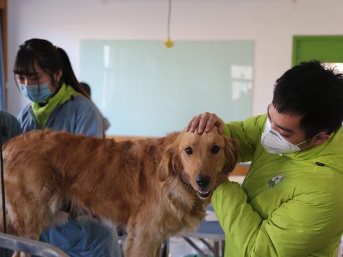 圣宠宠物美容师培训学校金毛犬实操