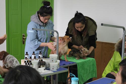 圣宠宠物美容培训学校医疗课