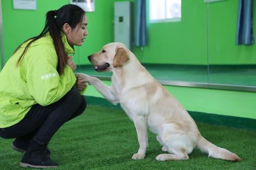 圣宠宠物培训学校驯导练习