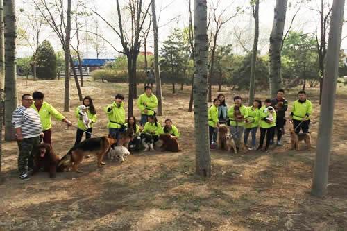 圣宠宠物培训学校课外驯犬练习