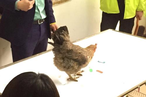 圣宠宠物培训学校73期训鸡课程