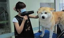 第74期宠物洗澡实操练习