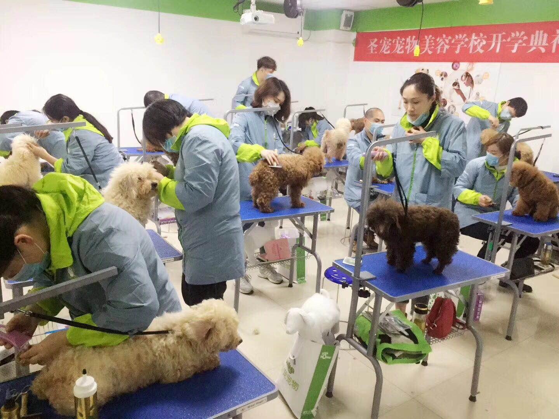 宠物美容师c级要学多久
